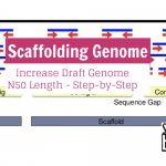 Scaffolding Genome: Increase Draft Genome N50 Length - Step-by-Step