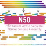 The Easiest way to Calculate N50 for Genome Assembly